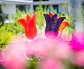 f34b1e02b3 2019-ben április 27 – 28. között már a XII. KERT-EXPO Kertészeti és  Mezőgazdasági Kiállítás és Vásárt rendezik meg Székesfehérváron.