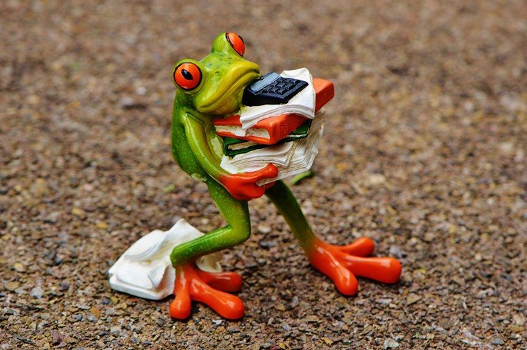 frog 1339892 1920