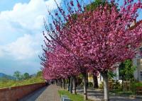 Virágba borult Budapest legszebb sétánya