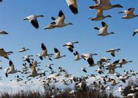 Hétvégén a madarakat figyeli egész Európa - 2020. október 3-4.