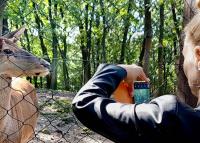 Meghosszabbítja országos fotópályázatát a Budakeszi Vadaspark
