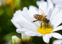 Egy ősi gyógymód, mellyel télen is erősíthetjük az immunrendszerünket