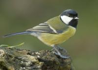 Hihetetlen, milyen helyekre képesek fészkelni ezek a madarak: de hogyan vigyázzunk rájuk?