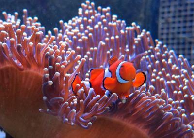 A lenyűgöző honlapon keresztül megismerhetjük Attenborough korallzátonyát