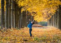 Harapni való levegő, csodás panoráma: 4 gyönyörű, őszi kirándulóhely Budapesten