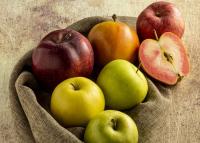 A hazai almának kampányol a Felelős Gasztrohős