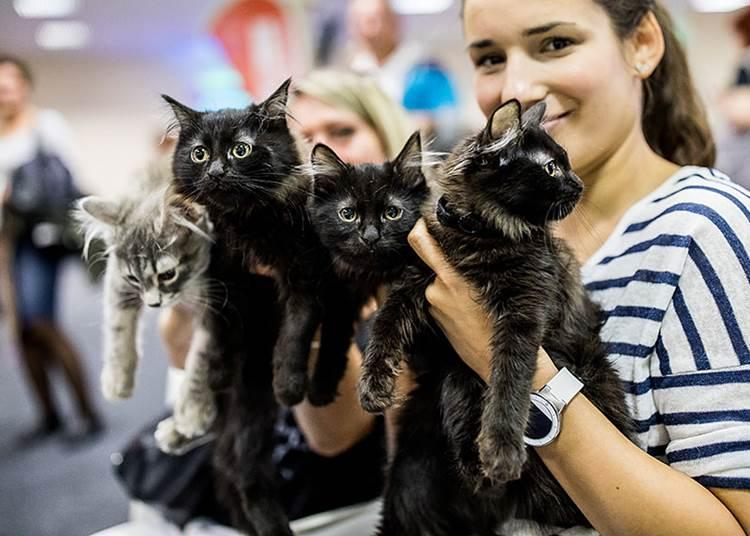 FIFe nemzetközi macskakiállítás, 2021 október 16 - 17.