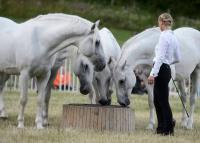 Világörökség lehet a lipicai ló tenyésztése