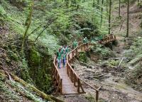 Az erdő rejtett kincseit bemutató tanösvény nyílt a Mecsekben