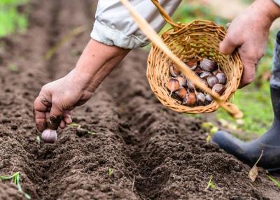 Kertészkedni még szabad - ezeket ültesd el márciusban