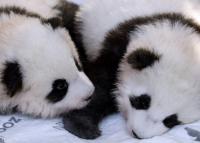 Na, mi lett a neve a berlini pandáknak?